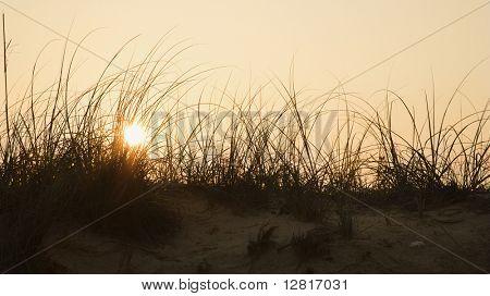 Sunset over beach sand dune on Bald Head Island, North Carolina.