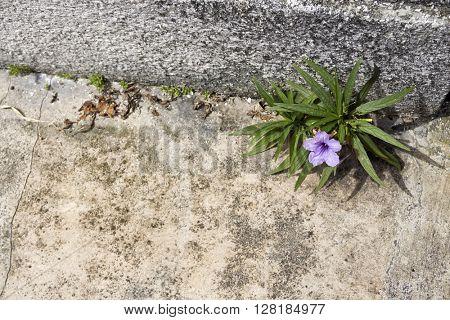 Flower grows on concrete floor