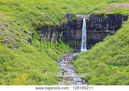 Black basalt columns frame the water jet. Picturesque waterfall Svartifoss in Skaftafell National Park of Iceland