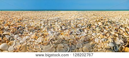 Beach covered with shells and sea on background. Sea of Azov. Image with shallow DOF.