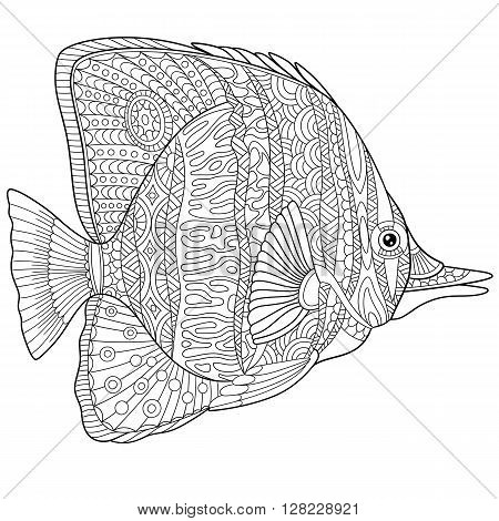 Zentangle stylized cartoon butterfly fish isolated on white background. Hand drawn sketch for adult antistress coloring page T-shirt emblem logo tattoo with doodle zentangle floral elements.