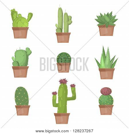 Cactus collection vector illustration. Cactus nature plant desert isolated mexico tropical art. Cactus nature plant succulent set. Tropical art cactus collection. Mexican cactus graphic botany cactus.
