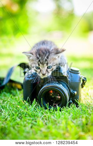 a gray kitten with noname camera, outdoor