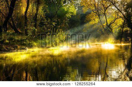 Autumn lake mist poster