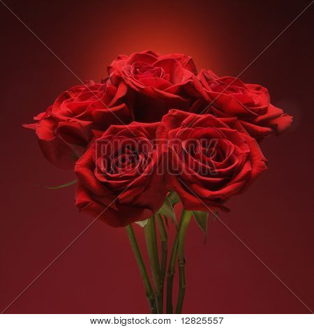 Bouquet of red roses against red background.