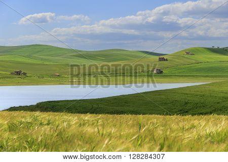 RURAL LANDSCAPE SPRING.Between Apulia and Basilicata: Lake Basentello.Poggiorsini (ITALY).Hilly landscape: lake surrounded by cornfields.