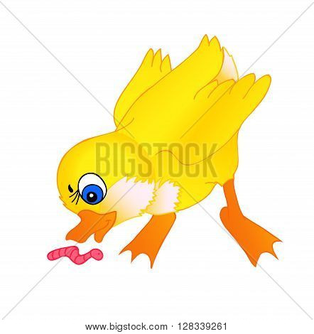 little duckling cartoon with isolation on a white background