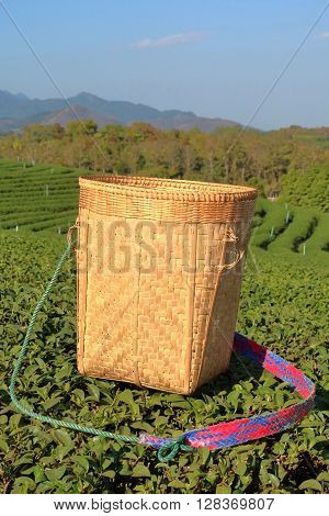 Tea wooden picker basket over the bushes in tea plantations.