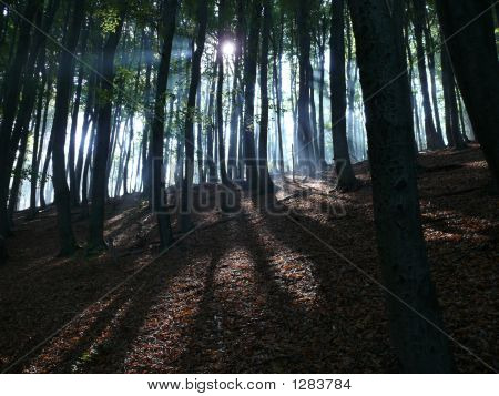 Light Rays In Wood