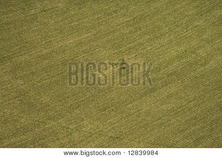 Aerial view of cultivated crop.