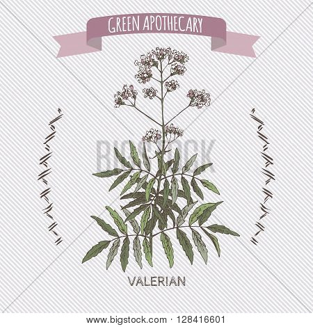 Valeriana officinalis aka Valerian color sketch. Green apothecary series. Great for traditional medicine, or gardening.