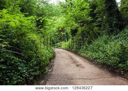 Lush green tree lined rural road in Scotland