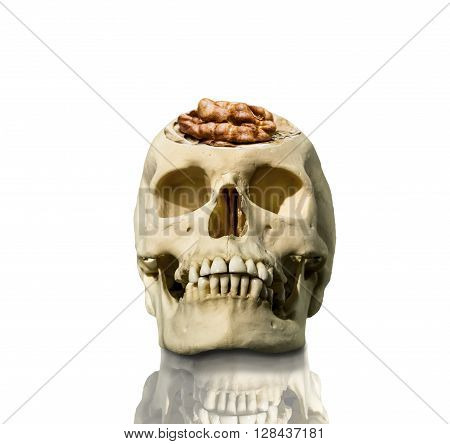 The exposed skull with the brain in the form of a walnut on a white background