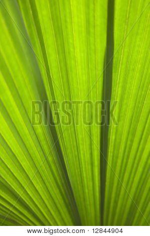 Close up of plant leaf detail, Daintree Rainforest, Australia.