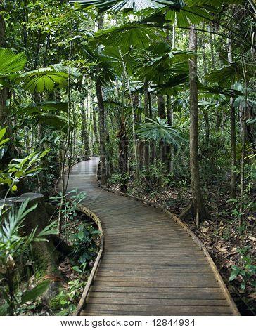 Wooden boardwalk through forest in  Daintree Rainforest, Australia.