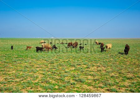 Sheep On A Farm