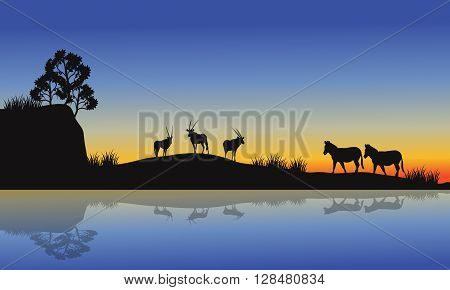 Antelope and zebra silhouette at morning in the river