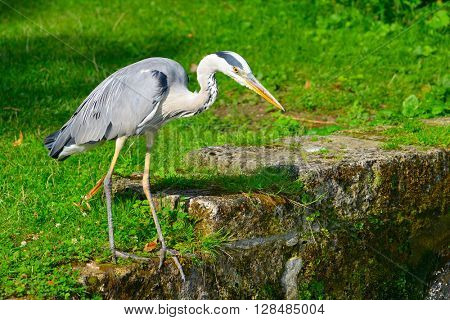 Heron on bank of stream in beautiful park