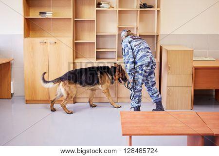 Policewoman works with shepherd in room.
