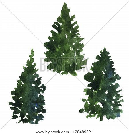 set of green fir trees drawing by watercolor, isolated forest element, conifer trees, hand drawn vector illustration