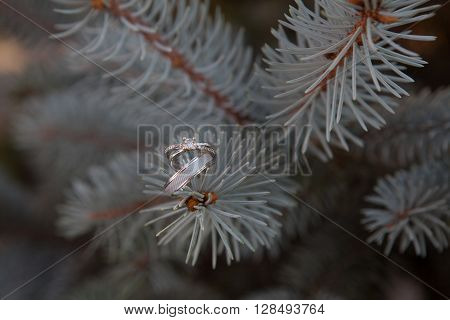 Engagement rings hanging on a spruce branch. White gold diamond wedding rings.
