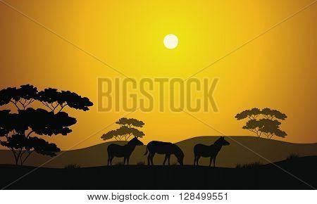 Beautiful zebra silhouette scenery in the hills