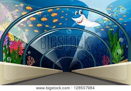 Public Aquarium with fish and coral reef illustration