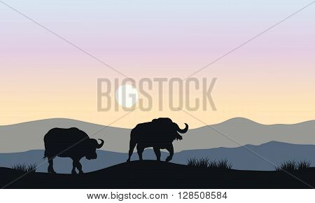 Silhouette of bull in hills at the morning