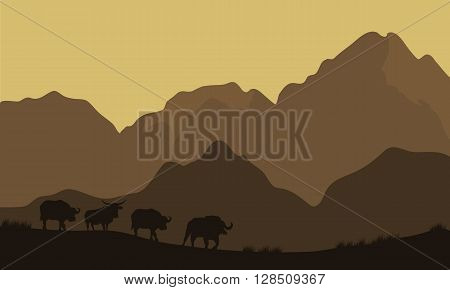 Silhouette of bull in mountain with brown backgrounds
