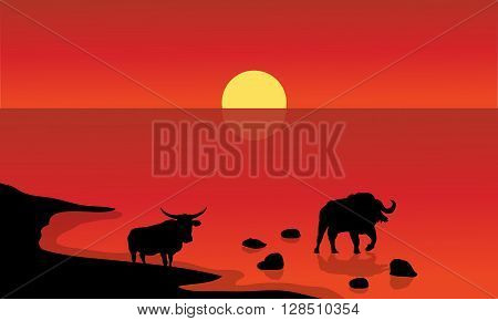 Silhouette of bull in lake with red backgrounds