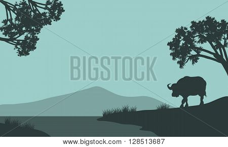 Single bison of silhouette in the riverbank