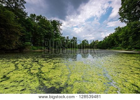 Polish landscape. Sunny day at the pond