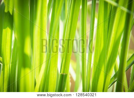 green plant background, nature background, abstract, background