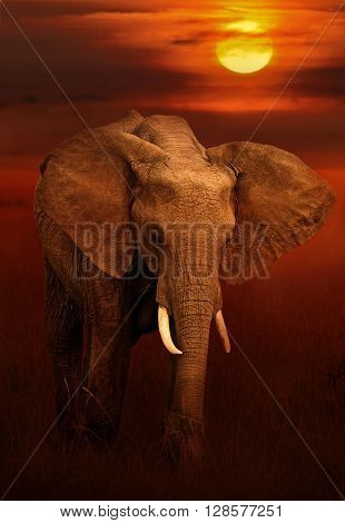 Elephant in masai mara national park Kenya