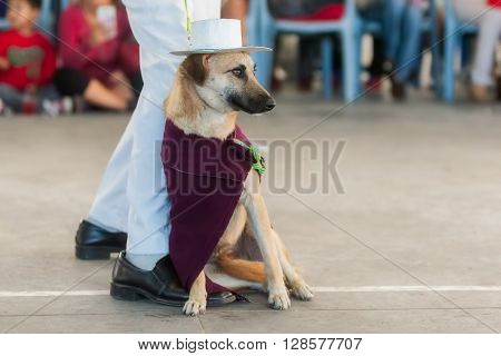 Adult Mongrel Dog Dressed As Indigenous In South America At An Competition For Dogs