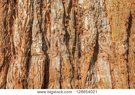 closeup background of textured redwood ree bark
