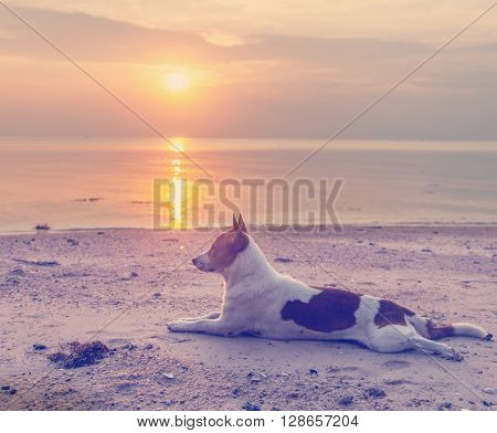 dog on the beach at sunset background