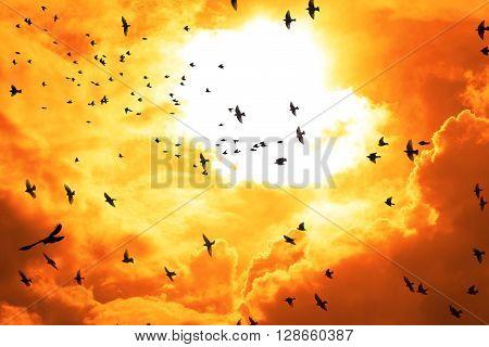 flocks of birds flying into a bright orange sunset sky