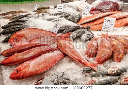 Fishmonger counter with salmon fillets bass and red snapper on ice
