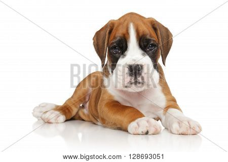 German Boxer Puppy On White