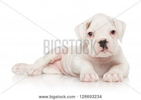 German Boxer Puppy On White