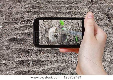 Farmer Photographs The Loosening Of Ground By Hoe