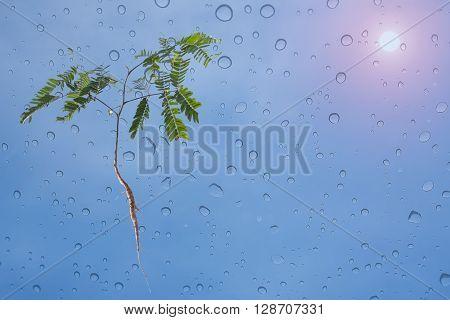 Seedlings of natural green plants. Rain sun and sky