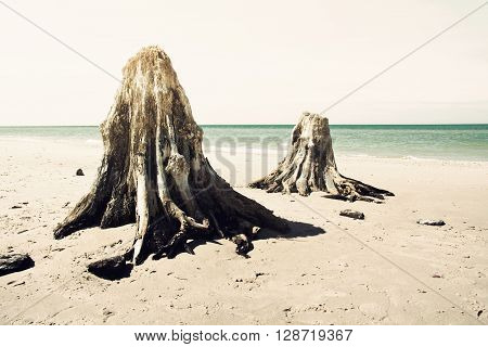 Dead trunks on the beach. Nature conceptual image. ** Note: Visible grain at 100%, best at smaller sizes