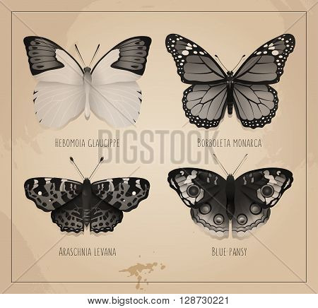 Collection of butterflies on a background of old paper with watercolor spots.