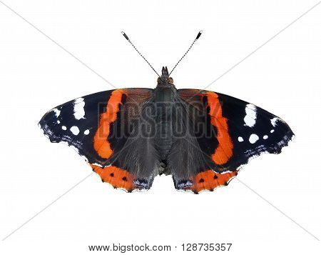 Butterfly: Red Admiral, Vanessa atalanta, isolated over white