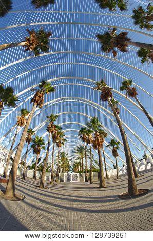 Palm alley in Ciudad de las artes y las ciencias in Valencia Spain