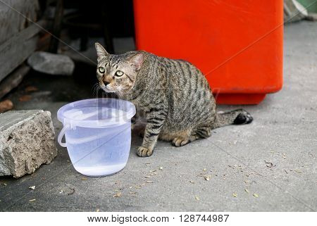 Paranoid cat feeling mistrust of the strangers.