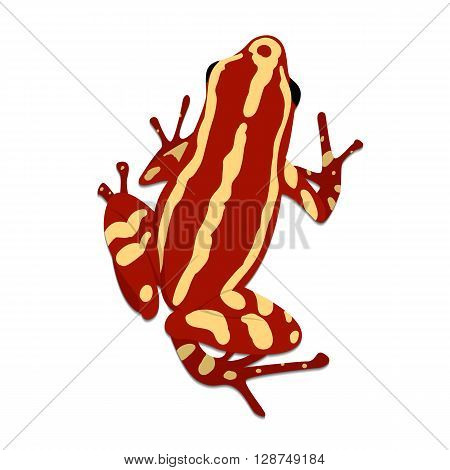 Phantasmal poison frog flat design. Vector illustration of red frog on white background. Poisonous frog. Isolated tree frog epipedobates tricolor top view
