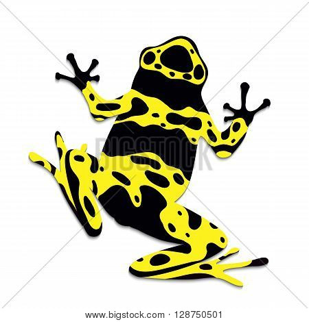 Poison frog flat design. Vector illustration of red frog on white background. Poisonous frog. Isolated tree frog epipedobates tricolor top view